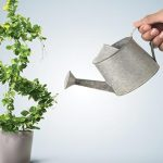What The Heck is a Seg Fund?